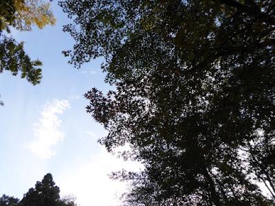 花博記念公園鶴見緑地 もみじ