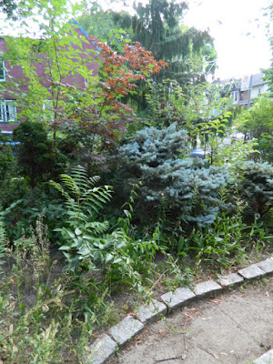 Leslieville Toronto front garden summer clean up before by Paul Jung Gardening Services