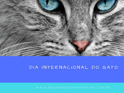 Dia Internacional do Gato