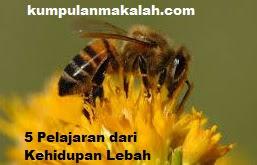 5 Pelajaran dari Kehidupan Lebah
