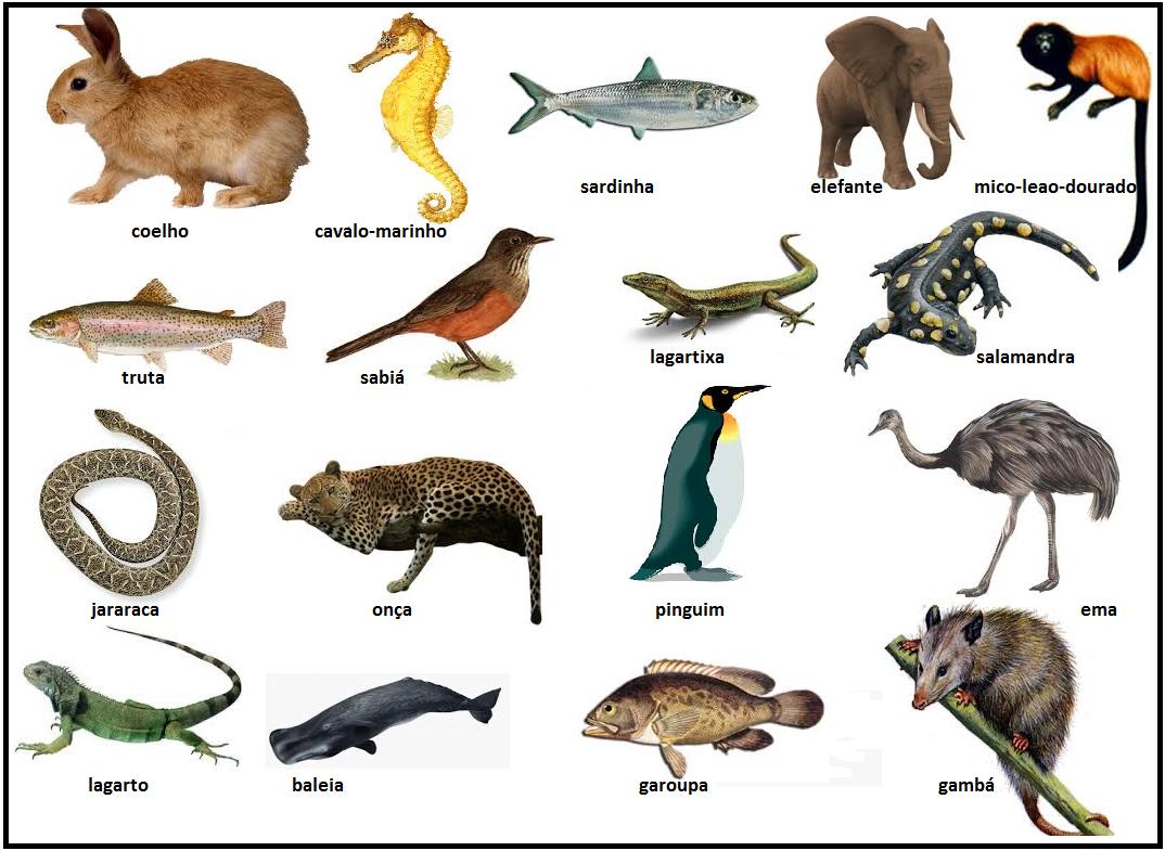 Dibujos Para Colorear De Animales Invertebrados Y Vertebrados: Animales Vertebrados E Invertebrados Fichas