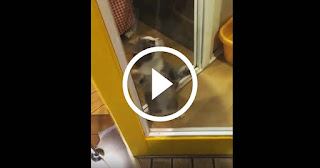 A Cat's Reaction to When His Human Comes Home is Too Cute!