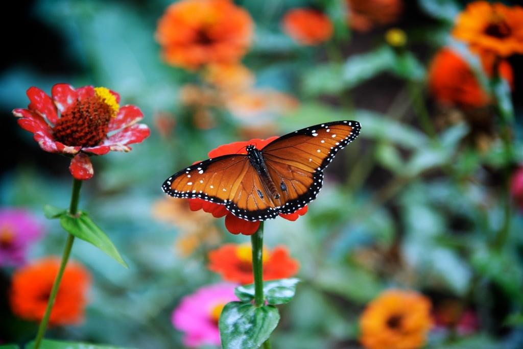 Angel Falls Wallpapers Desktop Butterfly Wallpapers Desktop Wallpapers