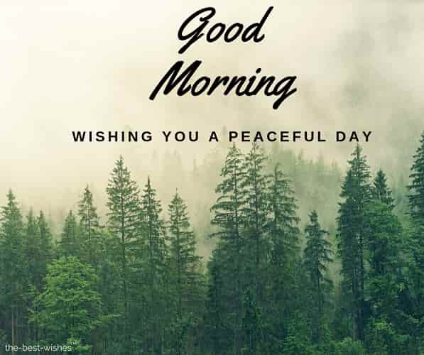 good morning wishing you a peaceful day
