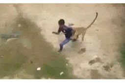 Mengerikan, Macan Tutul Menyerang Desa di India