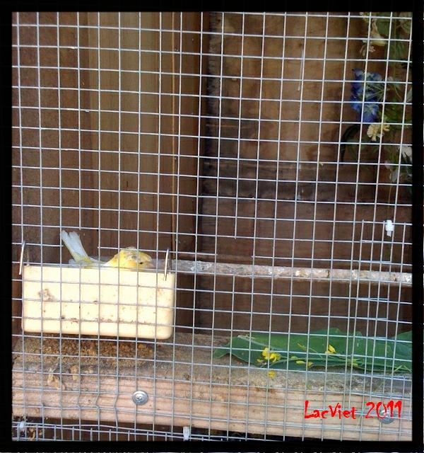 Canaries Food List