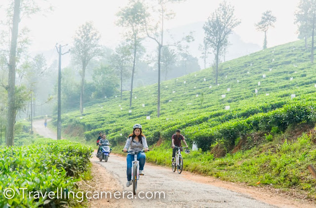 One the same lines, Tea gardens of Wayanad are equally interesting. Personally I love tea gardens as they look very beautiful in comparison to the coffee plantations.     3. See how Rubber is produced from trees :