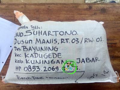 Benih pesanan  ONO SUHARTONO Kuningan, Jabar.  (Setelah Packing)