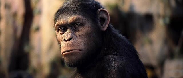 Os 10 animais mais inteligentes