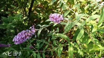 休日の昼間でも待たなかった。西武池袋の食と緑の空中庭園は子連れランチにも ベビヨリ