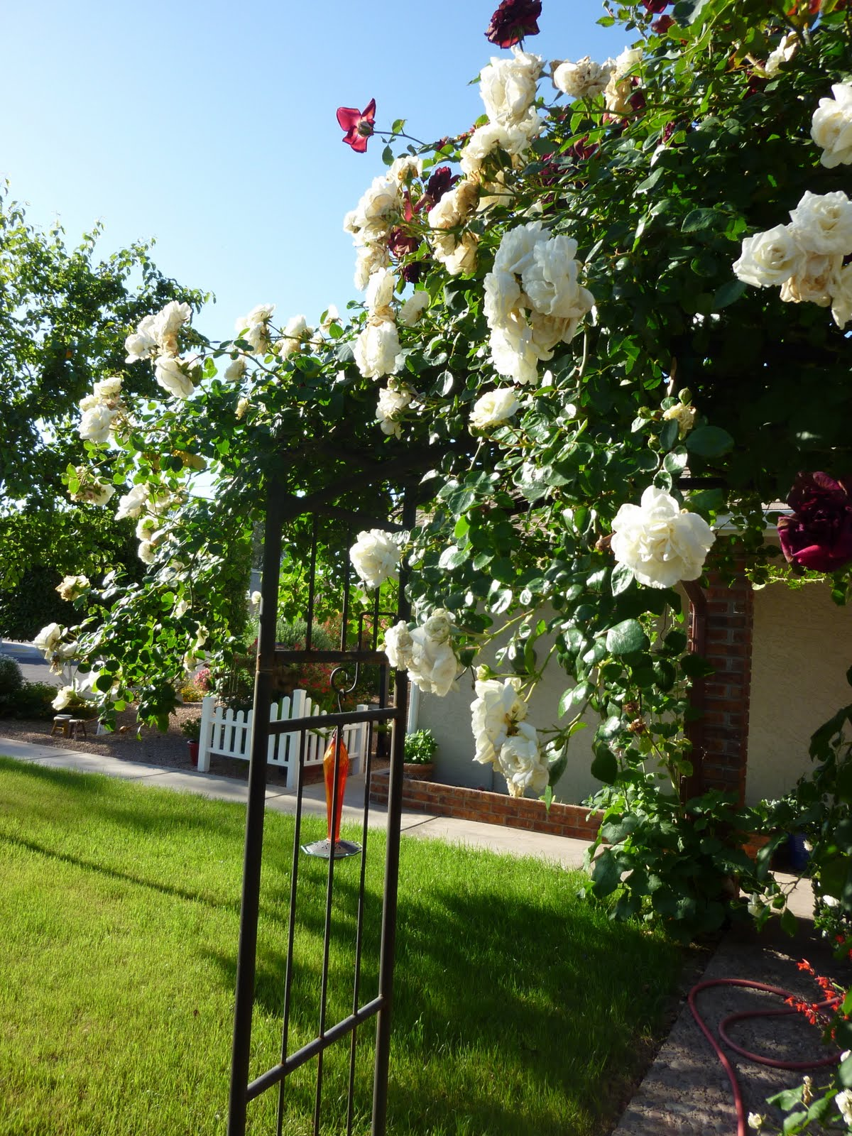 A Place To Share White Garden