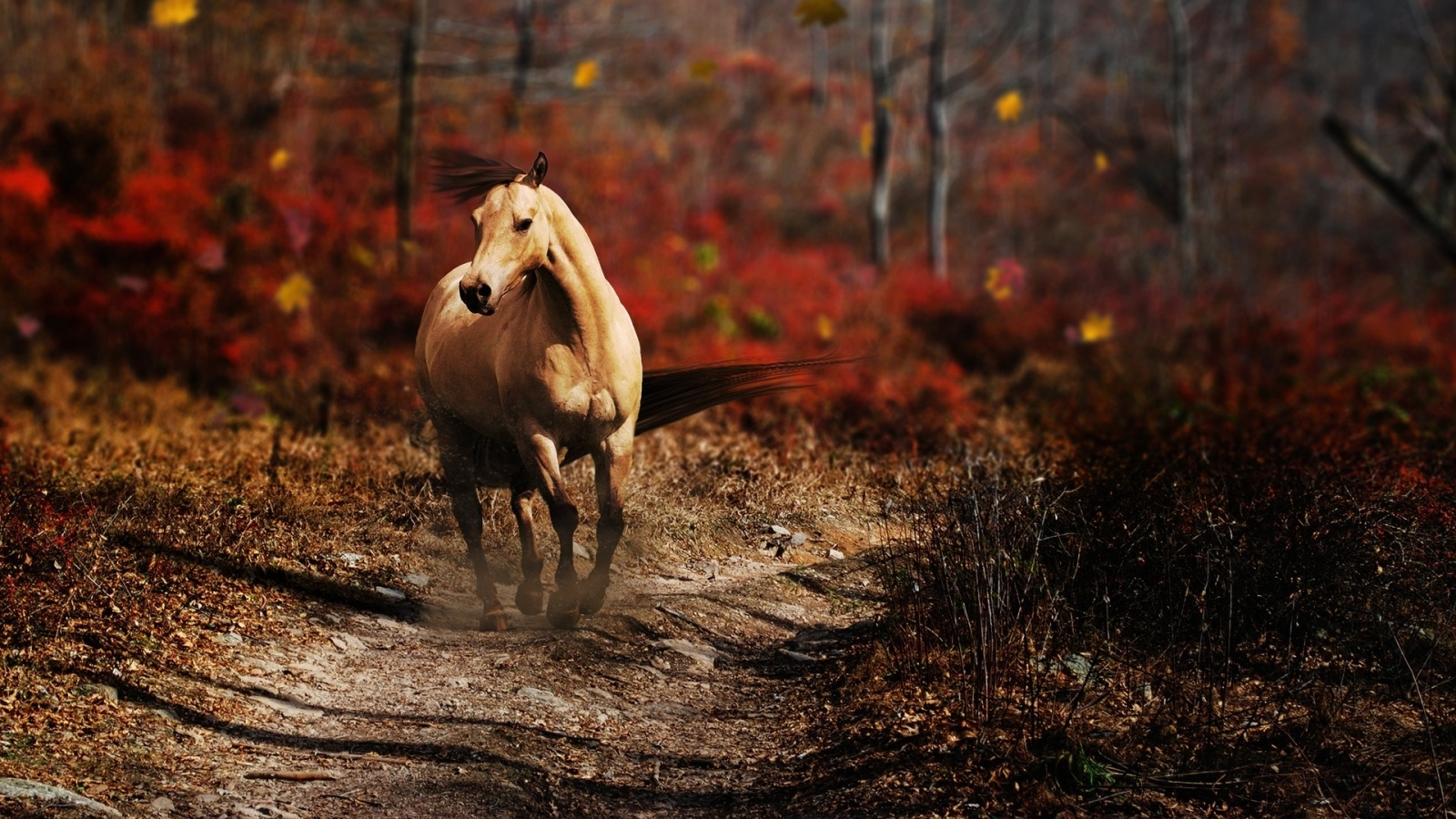 Fall Leaves Desktop Wallpaper Backgrounds Latest Horses Wallpapers Entertainment Only