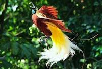 Persebaran Flora dan Fauna di Indonesia