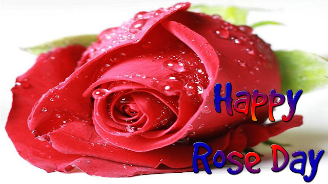 Lovely-rose-day-wallpapers