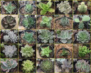 bibit-tanaman-kaktus.jpg