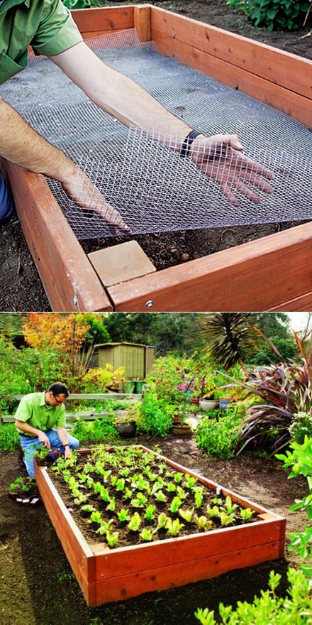 How To Keep Moles Out Of Raised Garden Bed