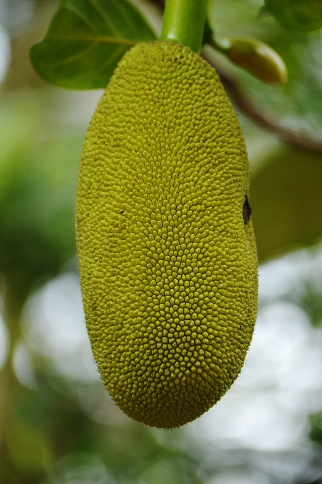 Designing House Photography Amp Me Jackfruit