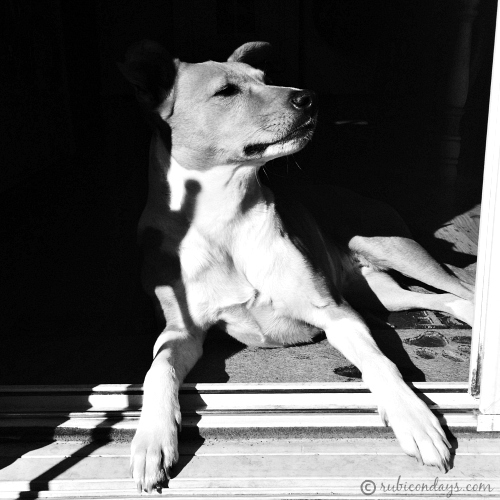 black and white dog in a doorway