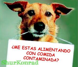 pavel-perro-intoxicado cachorro triste nestle dog can perro pet ShurKonrad Chaclacayo 1