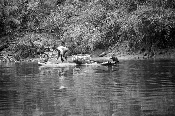 Yangshuo, Guilin, Lijiang, pêche au cormoran, © L. Gigout, 1990