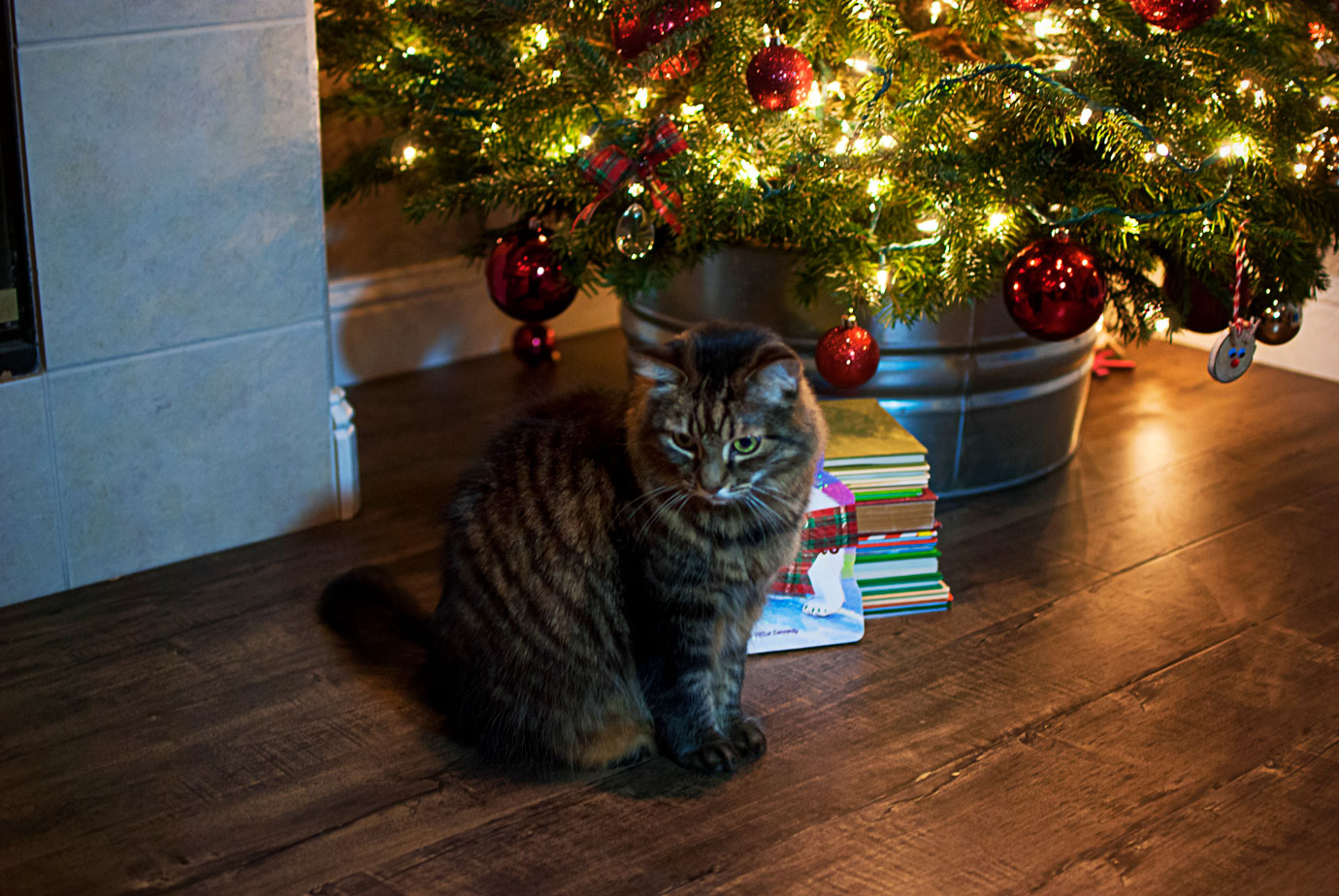 Samantha Cat Blocking The Photo Sitting In Front of The Christmas Tree #OneChristmasBear #ChristmasBook #ChristmasTraditions