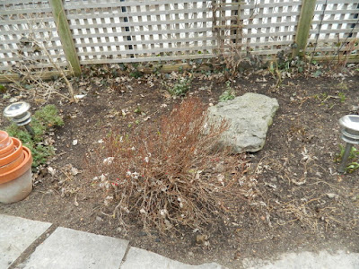 Leslieville Toronto Spring Back Yard Cleanup After by Paul Jung Gardening Services--a Toronto Organic Gardener
