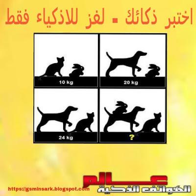 صورة و لغز - ماهو الوزن الحقيقي لكل حيوان في الصورة؟