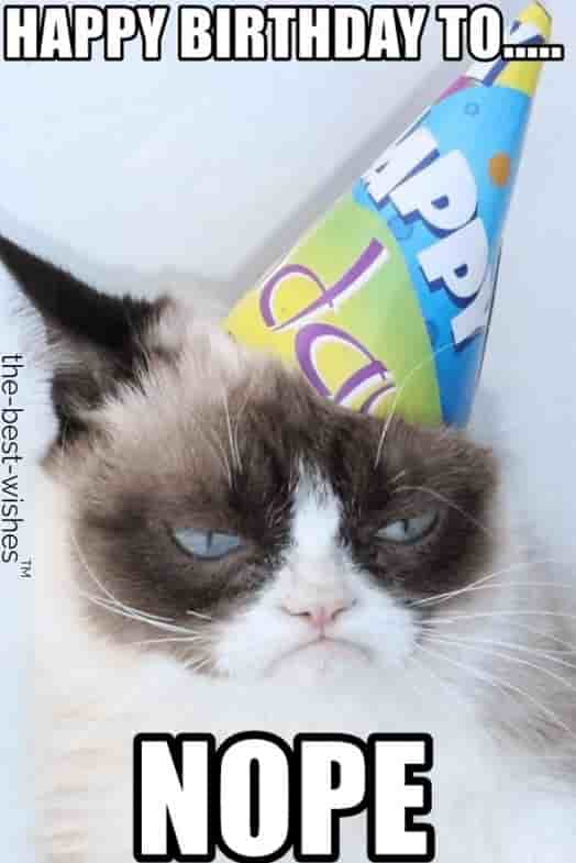 hilarious grumpy cat birthday memes to nope
