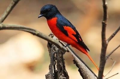 Mengetahui Lebih Dekat Tempat Sarang Burung Mantenan Di Habitat Aslinya