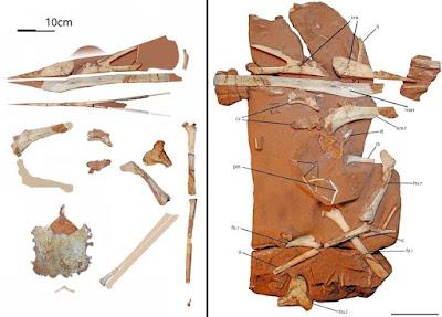 Species New to Science: [Paleontology • 2019] Keresdrakon