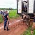 Polícia recupera gados  roubados na região de Boa Hora e Barras
