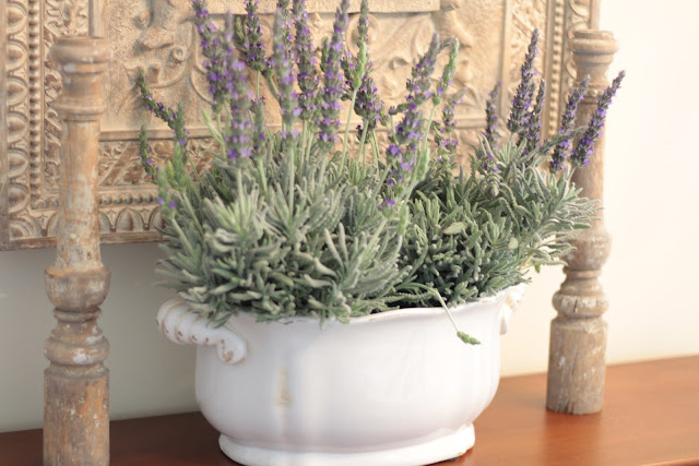 spring-tour-lavender-display