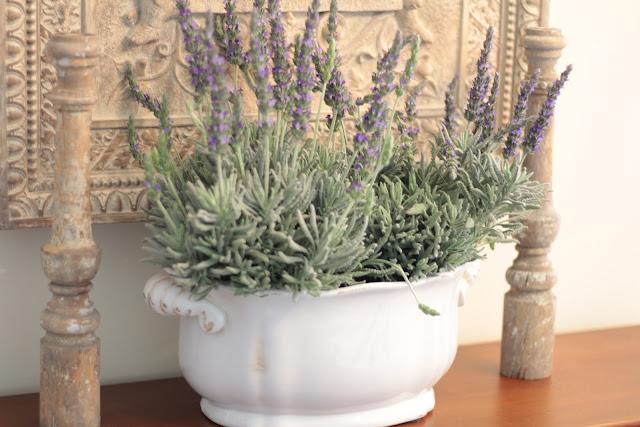 spring-tour-lavender-display