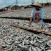 Menteri Saleh Dorong Industri Ikan Olahan Aceh