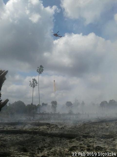 BNPB : 858 Hektar Lahan Sudah Terbakar di Riau