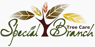 Logo design for Special branch by Mimi Pinto