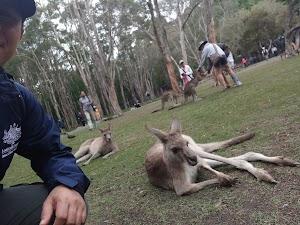 Selfie Dengan Kangguru Di Currumbin Wildlife Sanctuary - Australia