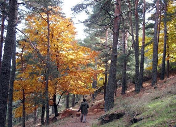 ¿Conoces el Arboreto Luis Ceballos, en El Escorial?