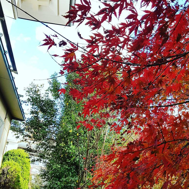 藥王寺接三號路線的楓葉,沒有什麼遊客