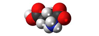 sifat fermentasi artikel dekarboksilase biokimia pdf asid aspartik monosodium glutamat Glutamik Asid, Sumber, Fungsi, Manfaat, Dos, dan Kesan sampingan