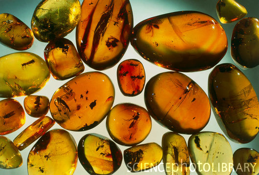 E Is For Explore Jurassic Amber Fossil Soap