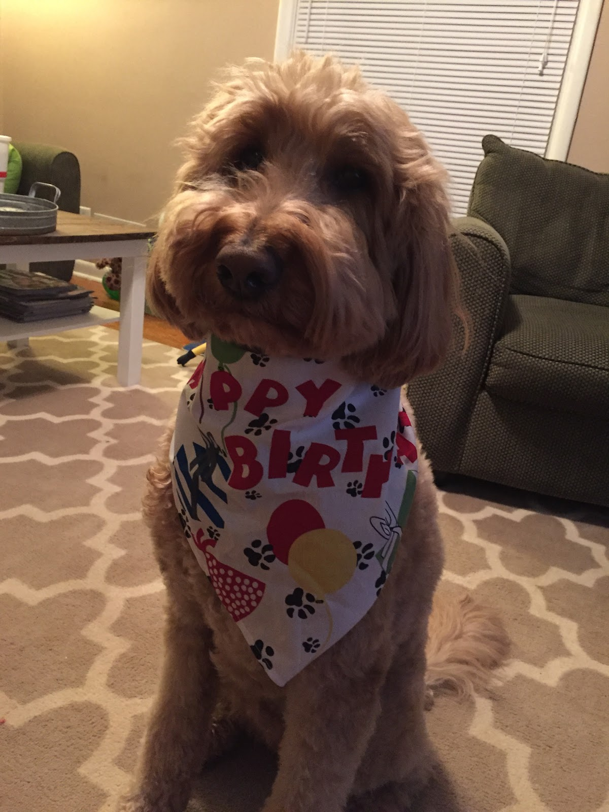 Happy Birthday Shirts For Dogs