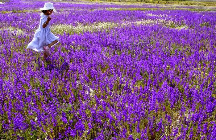 Cosas Para Photoscape Flores Y Plantas Arboles Ps: Litelayla: JUAN RAMÓN JIMÉNEZ
