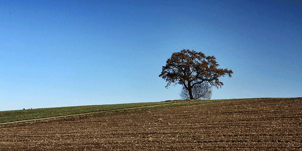 Gambar Pemandangan Alam Panorama Langit Dan Pohon