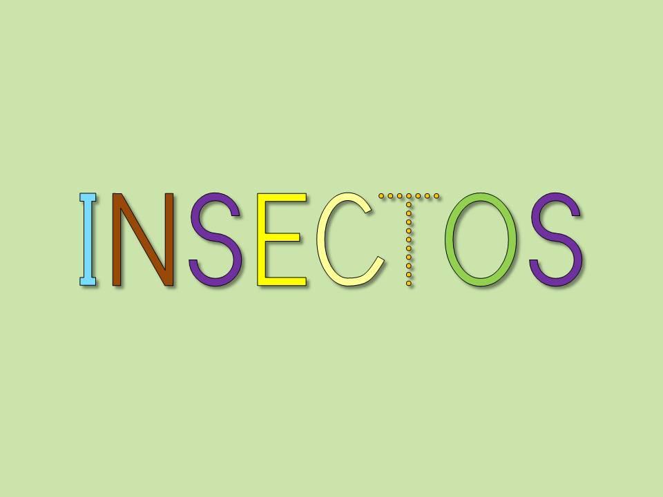 Cartilla De Lectura Infantil: CARTILLA DE LECTURA INFANTIL : INSECTOS