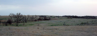 open country turkey habitat