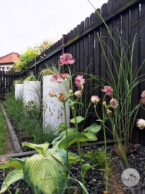 współczesny_minimalistyczny_ogrod projektowanie