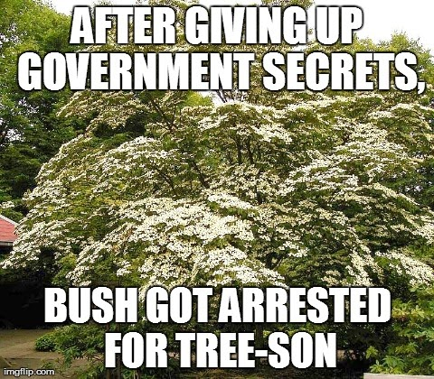 Political and Tree pun in one!