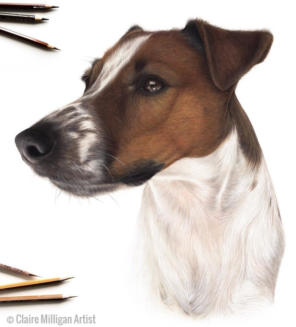 11-Parson-Russell-Terrier-Claire-Milligan-Pet-Portraits-and-Wildlife-Art-www-designstack-co