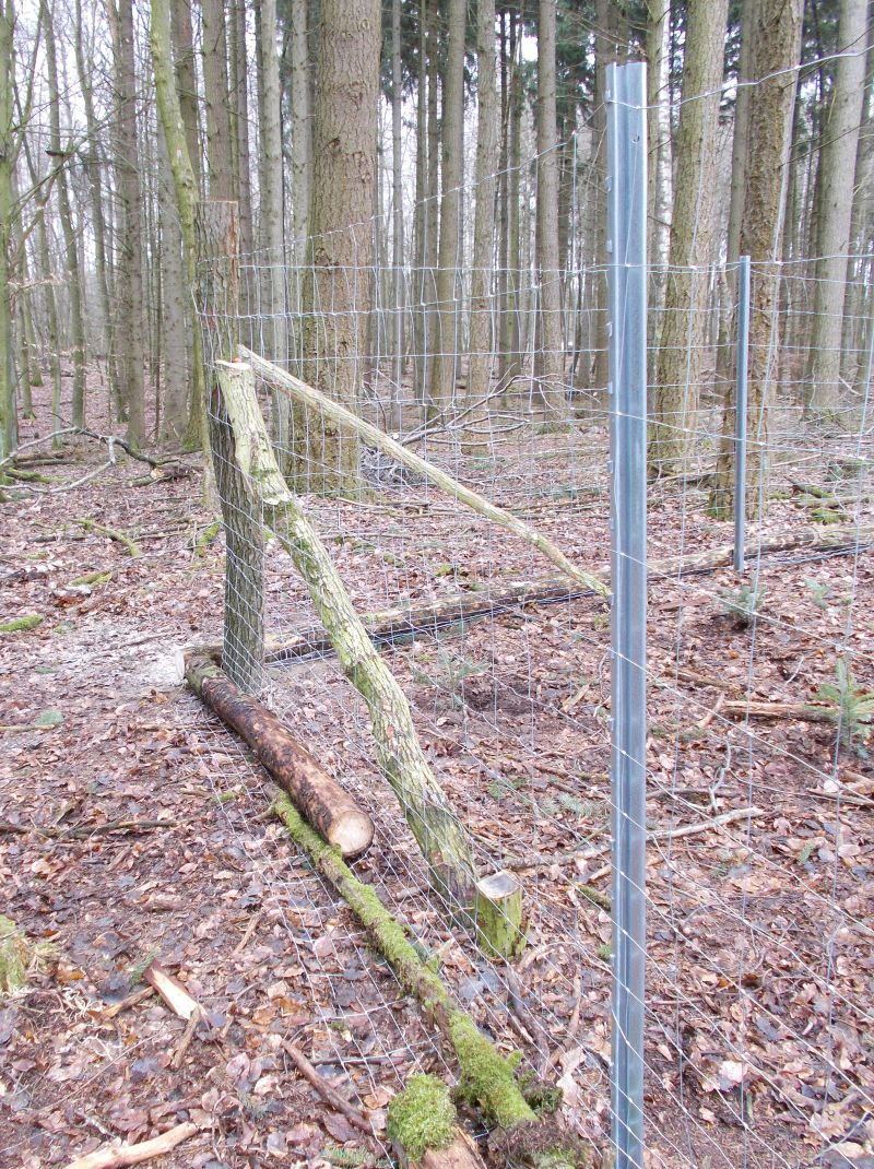 Bäume Pflanzen Wald
